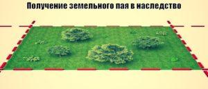 Сколько соток в пае земли