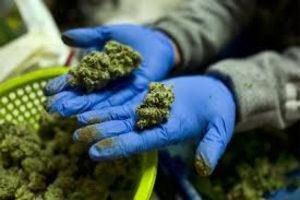 За употребление марихуаны статья